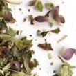 Fleur de chèvre - dôme de chèvre frais au lait cru (AB) - à l'origan