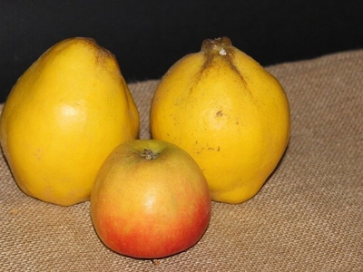 Compote d'Hiver : Pomme/ Coing (700g)