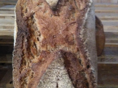 Farro (épeautre de Tartarie) – 1,2 kg
