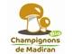 2 ème choix Champignons de Madiran Blonds (le PLATEAU  de 2kgs)