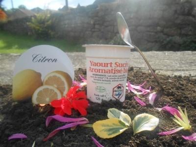 Yaourt aromatisé citron 125 gr lait entier