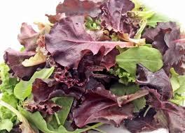 Jeunes pousses salade