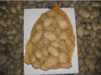 pomme de terre cephora 5kgs
