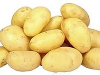 Pommes de terre nouvelle Margod