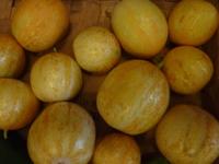 Concombre jaune lemom