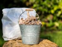 VRAC épicerie :  PATES blé poulard les 500g  65 cizos