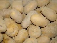 """Pommes de terre """"chair ferme"""""""