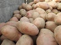 "Pommes de terre ""chair tendre"""