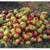 Pommes mélange plusieurs variétés (sachet de 1KG)